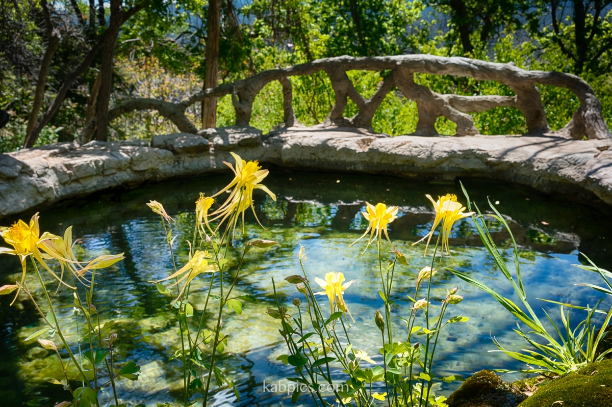 Nature Nearby: Albuquerque's Carlito Springs